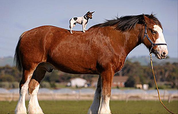 tiny-dog-on-horse