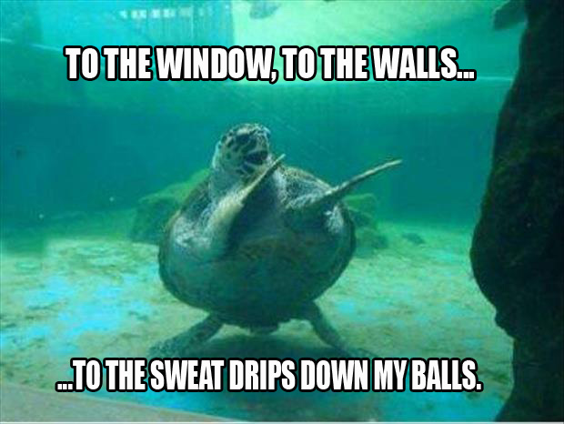 to the window, to the walls, and the sweat drips down my balls