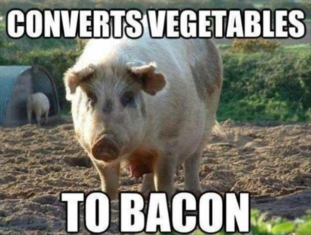 turns vegetables into bacon funny pigs