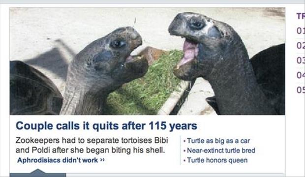 turtles funny images