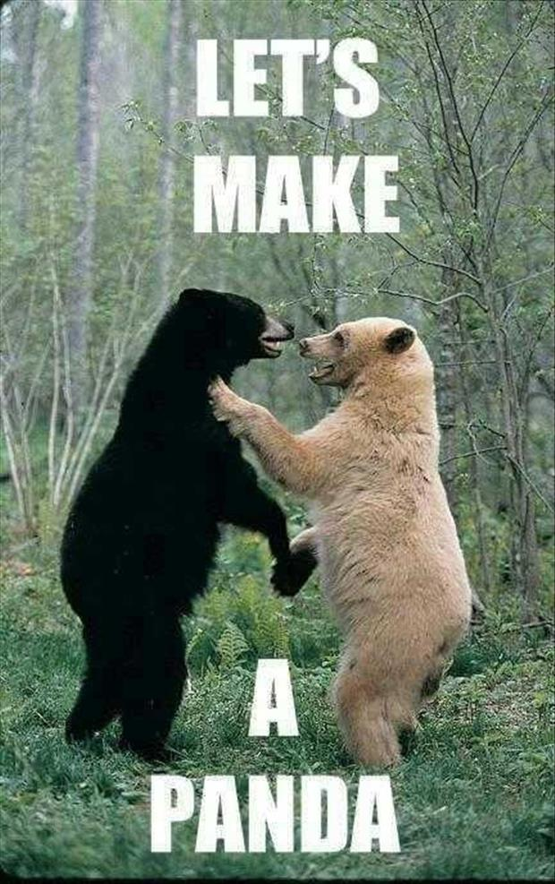 two bears making a panda