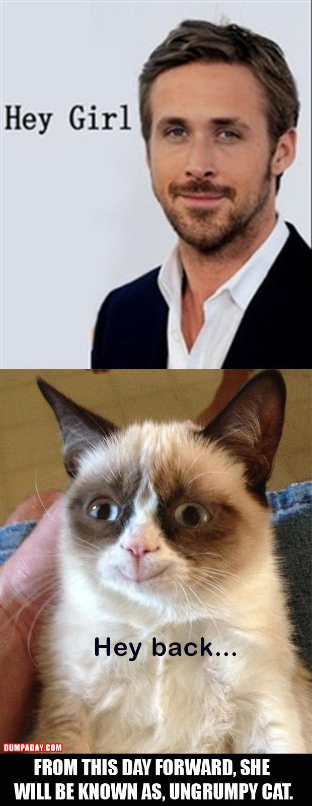 ungrumpy cat is not grumpy anymore