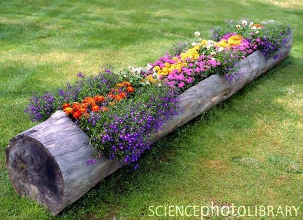 use an old log to grow flowers