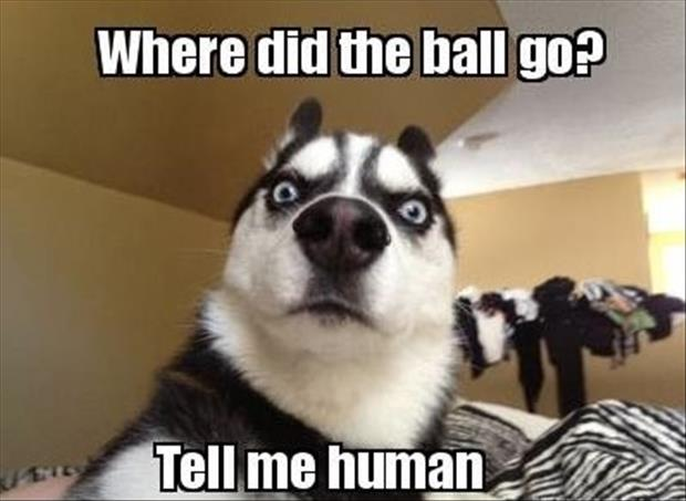 where did the ball go human funny dogs
