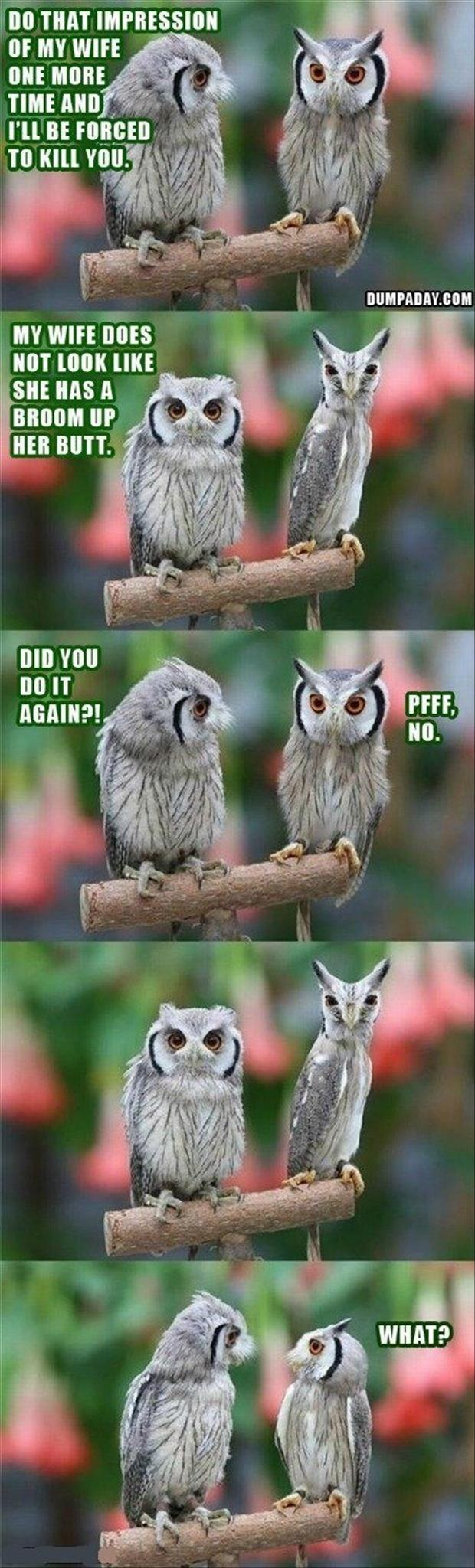 wow the owls funny pictures