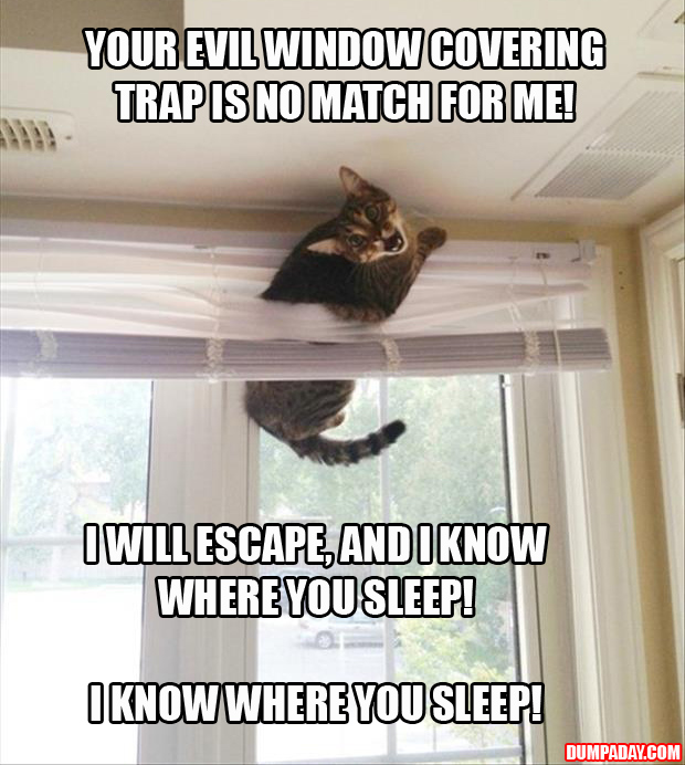 A cats and blinds funny pictures (16)