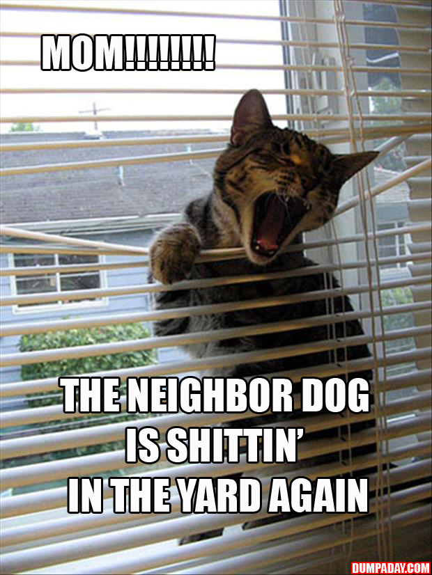 A cats and blinds funny pictures (20)