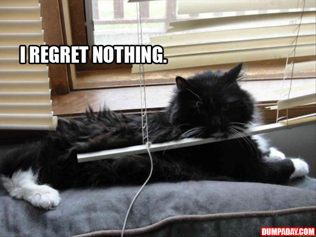 A cats and blinds funny pictures (4)