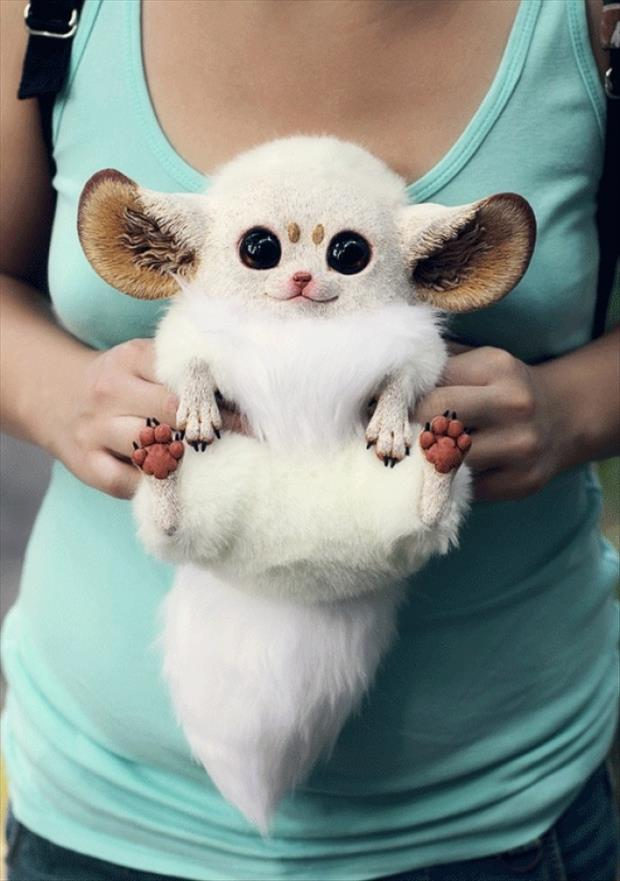 Funny Animals- Inari Foxes