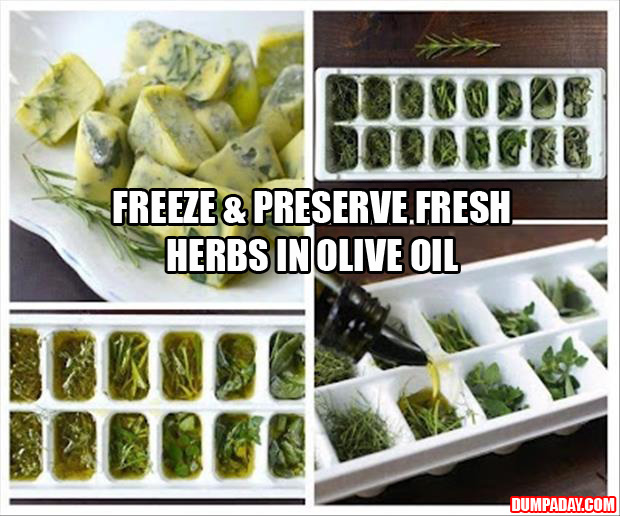 a Freeze & Preserve Fresh Herbs in Olive Oil