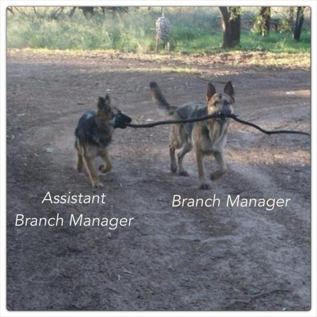 a branch manager funny dogs