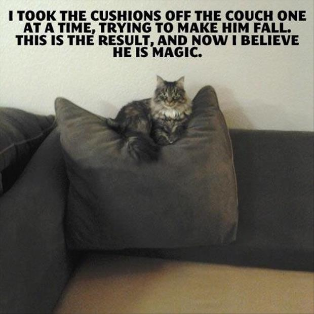a cat on the couch