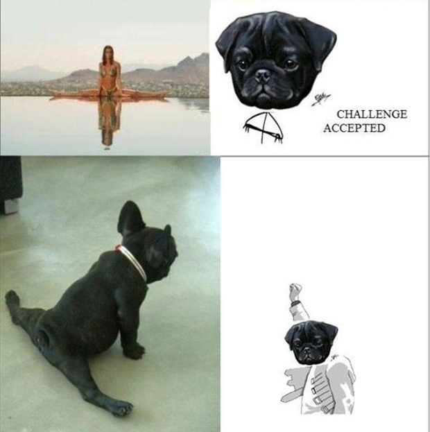 a challenge accepted, dog doing the splits