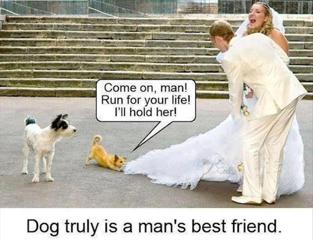 a dog is trying to stop a wedding humor images