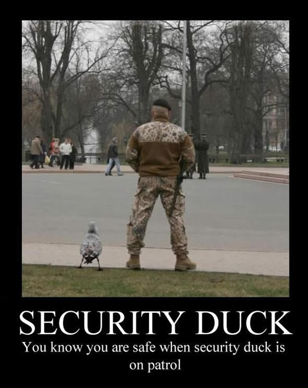 a funny demotivational posters ducks