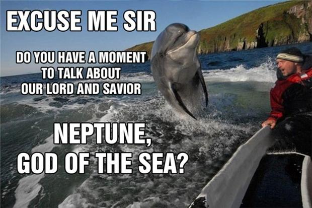 a funny dolphin pictures