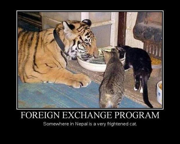 a funny pictures foriegn exchange program
