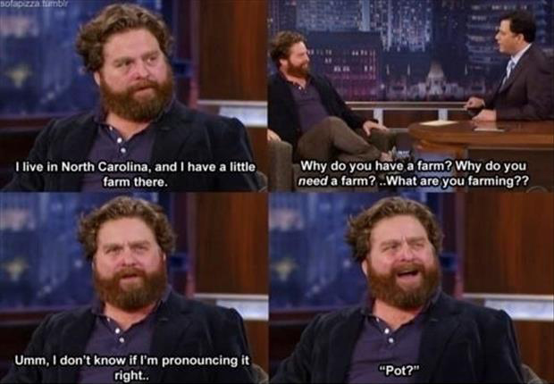 a funny zack galifinakis quotes