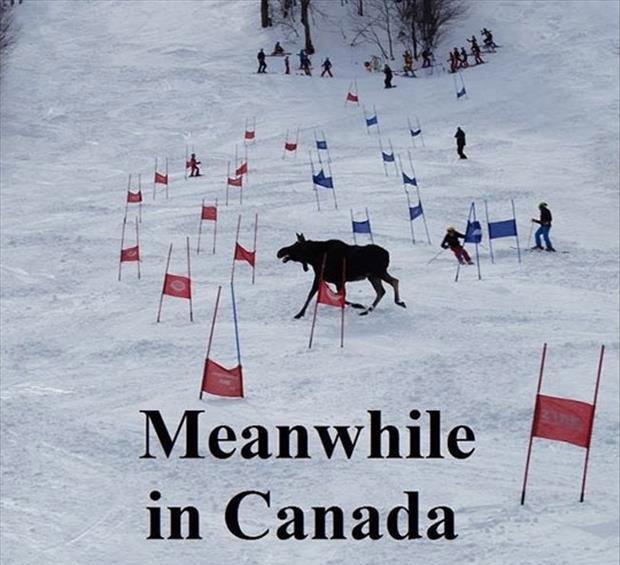 Funny Animal Pictures With Quotes For Facebook a meanwhile in canada ...