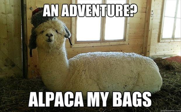 Image result for Alpaca Road Trip Meme
