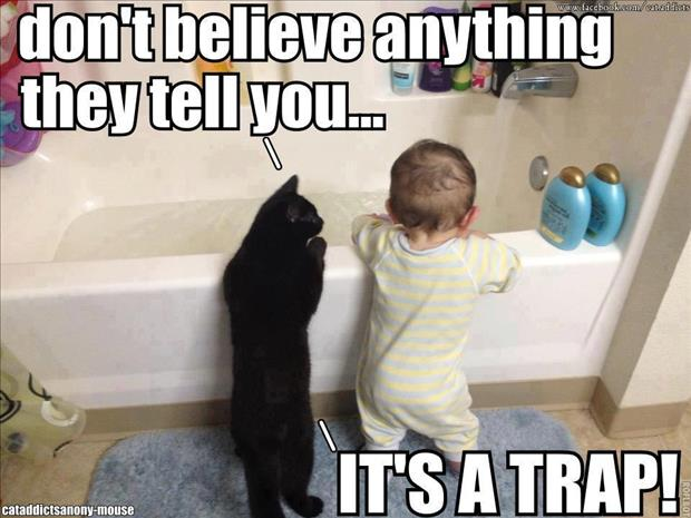 baby and cat taking a bath funny images
