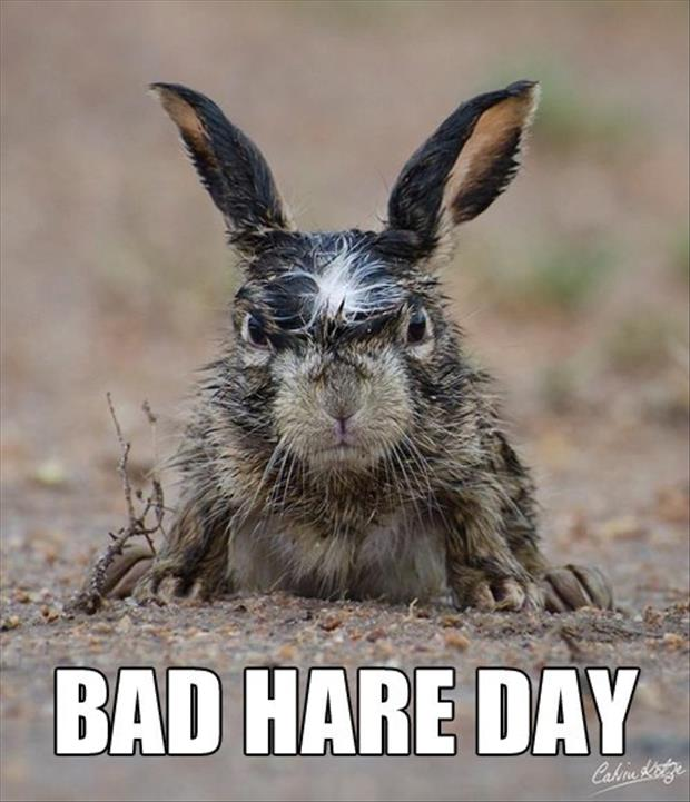 bad hair day funny pictures
