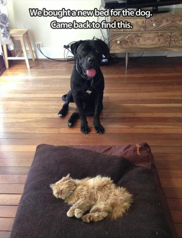 bed for the dog is taken over by the cat
