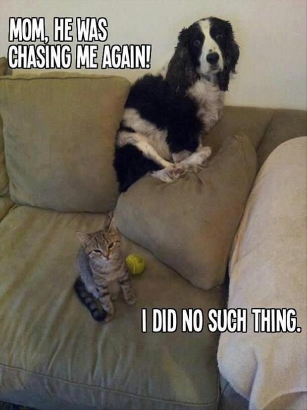 Attack Of The Funny Animals - 38 Pics Funny Pictures Of Dogs