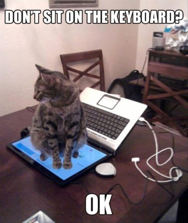 cat is not allowed to sit on the keyboard