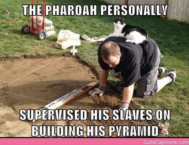 cat is the kind and must rule over his slaves funny pictures