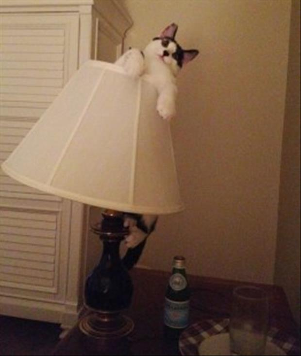 cat on lamp shade