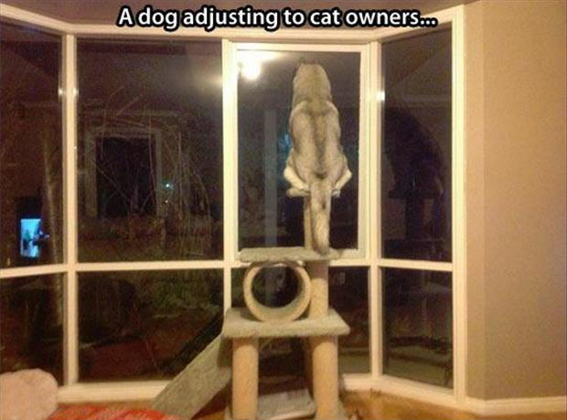 cat owners funny dogs