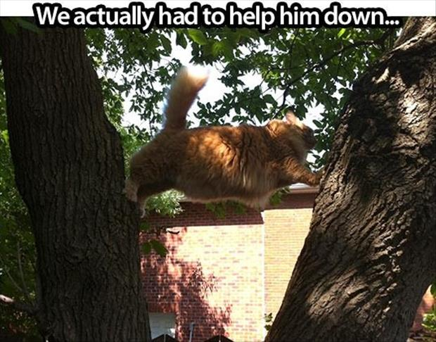 cat stuck in the tree