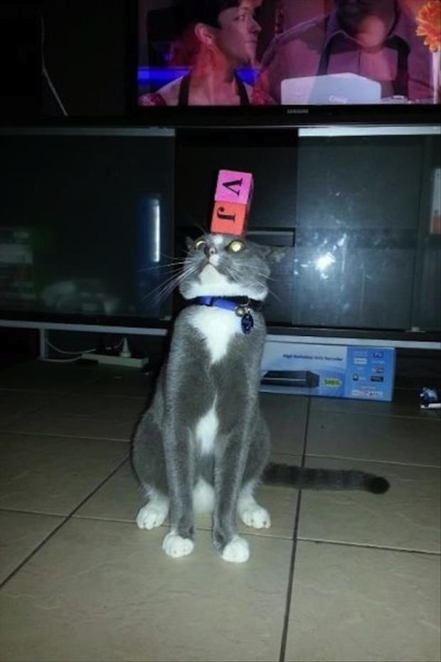cat with something on his head