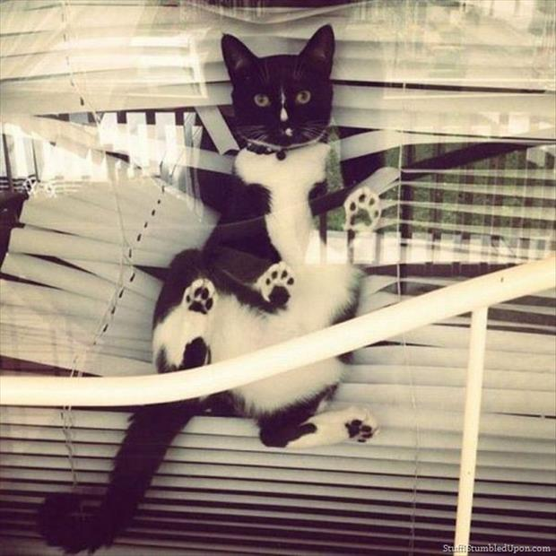 cats and blinds funny pictures (1)