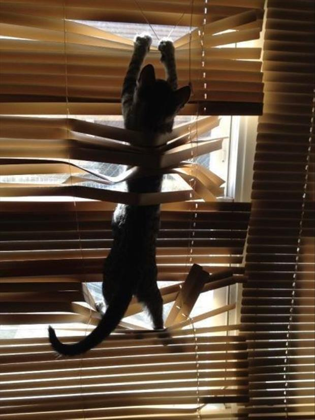 cats and blinds funny pictures (10)