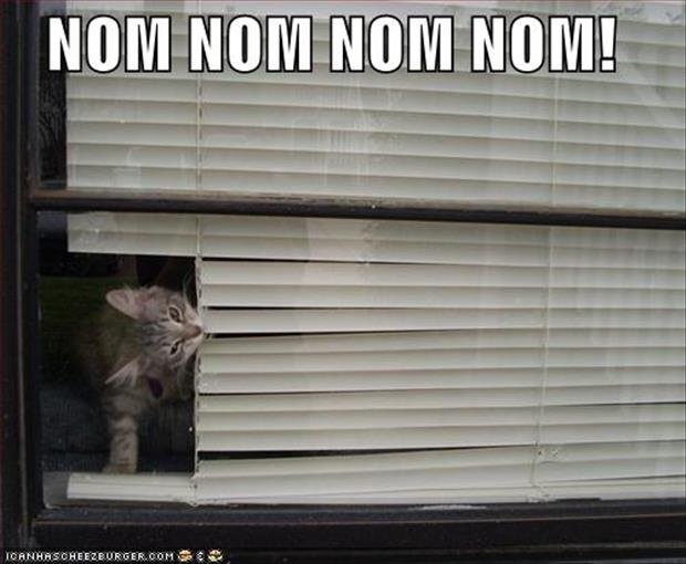 cats and blinds funny pictures (11)