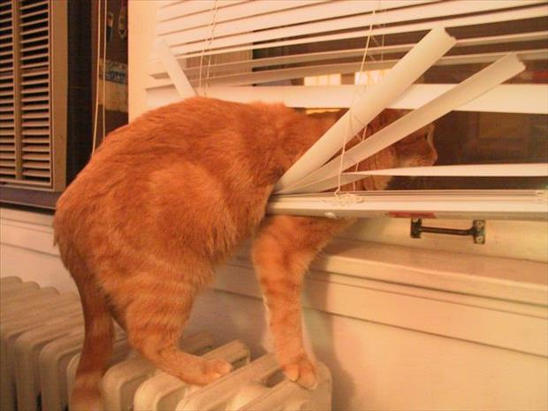 cats and blinds funny pictures (13)