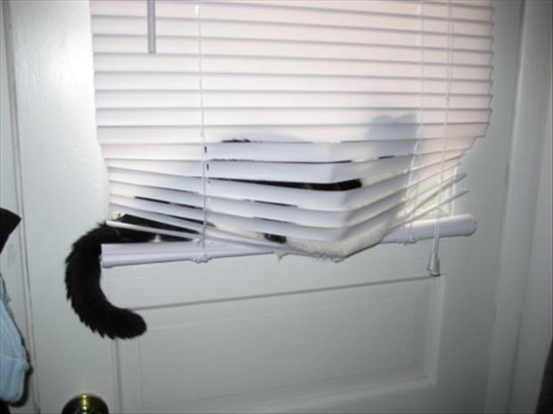 cats and blinds funny pictures (15)