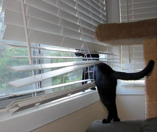 cats and blinds funny pictures (17)