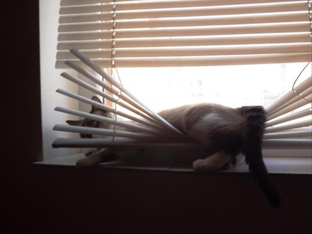 cats and blinds funny pictures (18)