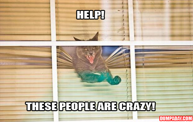 cats and blinds funny pictures (2)