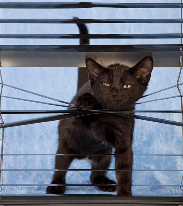 cats and blinds funny pictures (21)