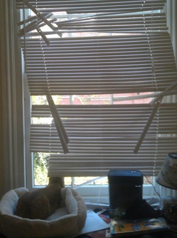 cats and blinds funny pictures (22)