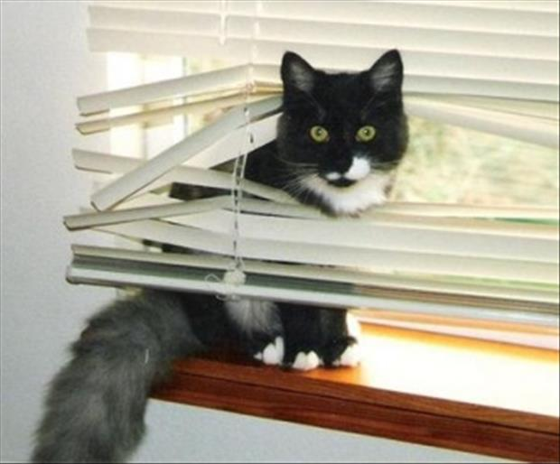 cats and blinds funny pictures (23)