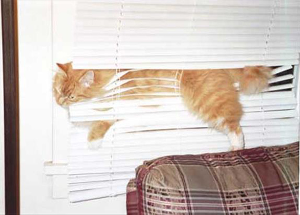 cats and blinds funny pictures (24)