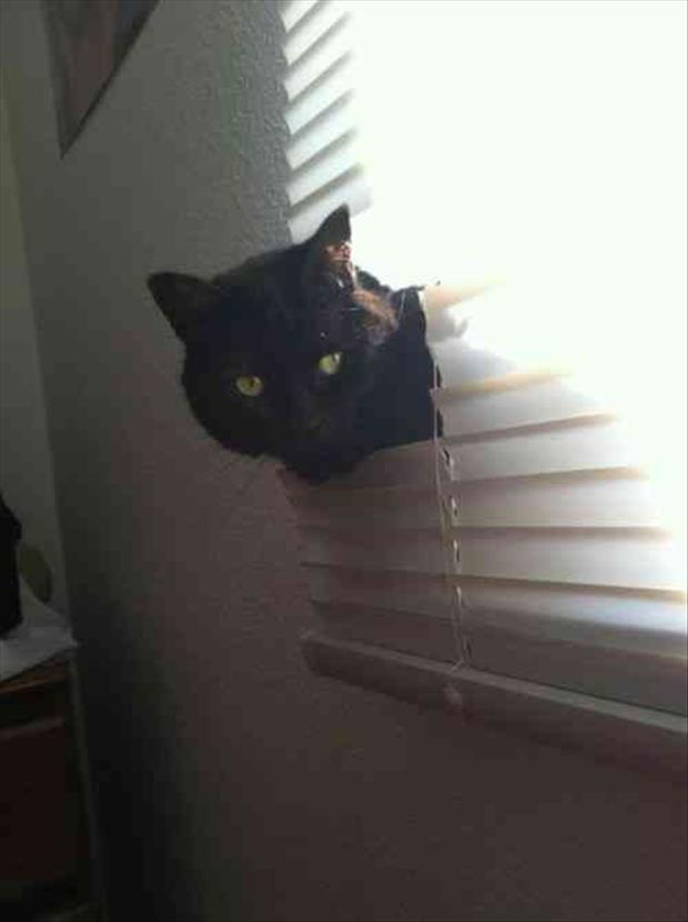 cats and blinds funny pictures (5)