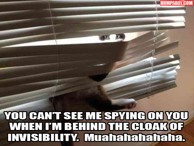 cats and blinds funny pictures (6)