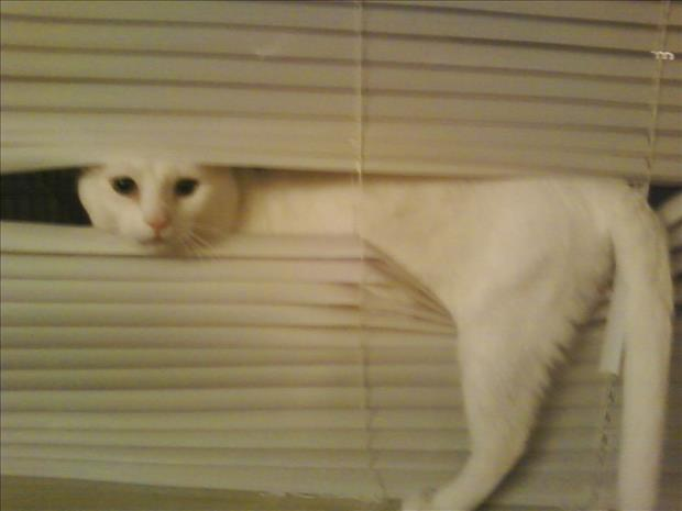 cats and blinds funny pictures (7)