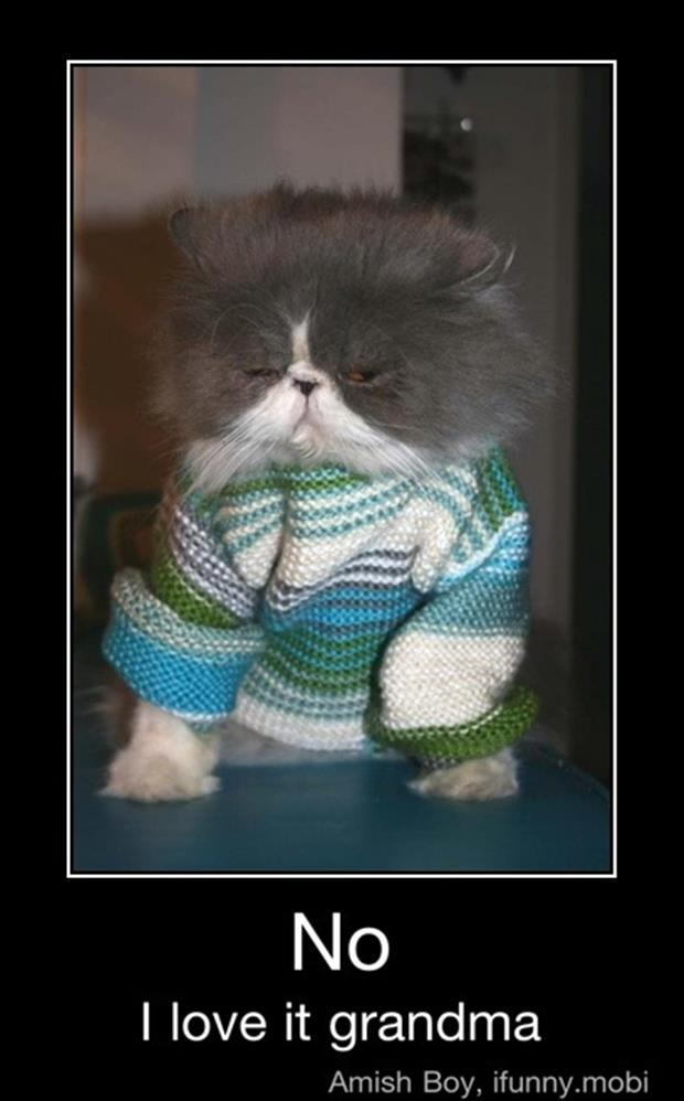 demotivational posters cat wearing a sweater